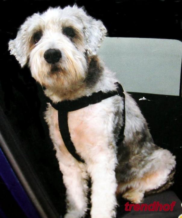 Hunde Sicherheitsgurt Gurt M bis 40 kg Geschirr Brustgurt